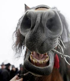 Hehe..he knows something. Get it nose?? lol..sometimes I crack myself up. lol