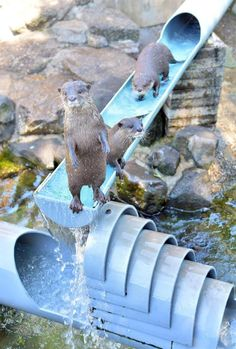 """""""Welcome to the otter slide."""""""