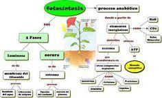 Resultado De Imagen Para Esquema Sobre El Proceso De La Fotosintesis Fotosintesis Proceso De La Fotosintesis Fotosintesis De Las Plantas