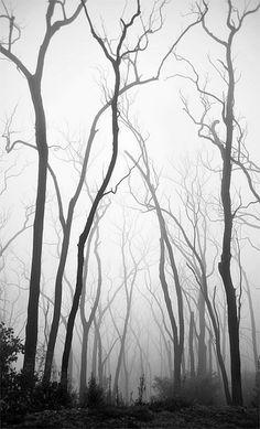 Beautiful, black&white
