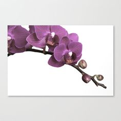 Purple Radiant Orchid Canvas Gallery Wrapped by LegendsofDarkness #photography #photocanvas #walldecor #canvasart #radiantorchid #orchid #purple #legendsofdarkness