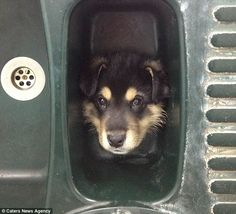 Adorable 8-week-old puppy gets his head stuck in the drain hole of an old sink...