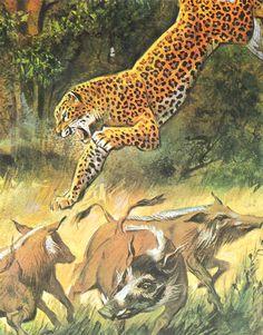 Wildlife Paintings, Wildlife Art, Wildlife Of India, Zoo Art, Lion Painting, Exotic Cats, Alternative Art, Majestic Animals, Animals Images