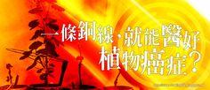 . 2010 - 2012 恩膏引擎全力開動!!: 一條銅線,就能醫好植物癌症?