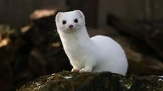 Amazing Tundra animals