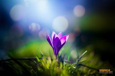 Flower in morning sun by Reinhard Loher Morning Sun, Flowers, Plants, Photography, Nature, Flora, Plant, Photograph, Royal Icing Flowers