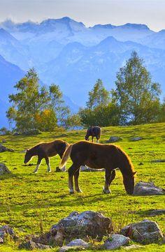 El Valle de Arán, situado en los Pirineos Centrales, en Lérida, es un paraje…