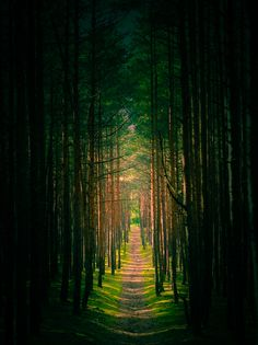 Blow this up & frame it in my living room. Tree Tunnel, Ukraine photo via alexia Beautiful World, Beautiful Places, Peaceful Places, Tree Tunnel, Espanto, Les Beatles, Walk In The Woods, Celestial, Historical Sites