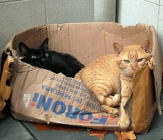"""""""We don't care if this box is old, it's so comfy!"""" Cats just love love love boxes.... (by Mãos do Rio on Flickr)"""