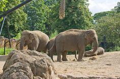 Elephants In Dublin Zoo