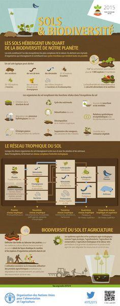 Sol & Biodiversité