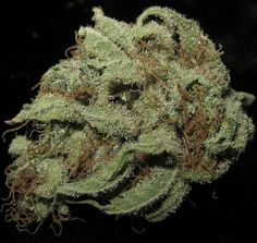train wreck weed - Google Search