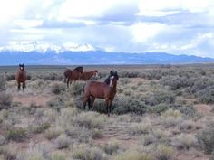 Southern Colorado Mustangs Photograph