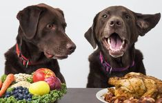 10 Best Homemade Dog Food Recipes for Large Dogs - rice Whole grain pasta Peas Potatoes Sweet potatoes Corn Oatmeal Fruits Fruits provide your dog wit - Best Dog Food, Best Homemade Dog Food, Best Dogs, Pancreatitis In Dogs, Dog Diet, Cat Food, Dog Eating Food, Large Dogs, Dog Treats