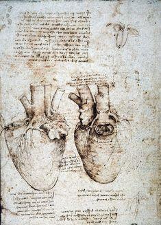 Anatomy Sketches, Anatomy Art, Anatomy Drawing, Obras Leonardo Da Vinci, Mona Lisa, Gravure Illustration, Arte Sketchbook, A Level Art, Fine Art Prints