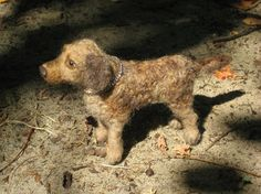 Needle Felted Dog Memorial / Custom Portrait Sculpture from your Pet Photo / Poseable Example Chesapeake Bay Retriever on Etsy, £170.14