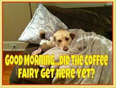 Let us be your coffee fairy!! Today's Flavors: Monsoon Malabar, Peanut Butter Cup & Amaretto!