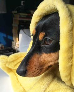 This weather is snow joke! ❄️⛄️ I'm staying tucked up under my blankie til the sun comes back!  .  .