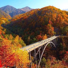 Kita-Alps Bridge in Shinhodaka Gifu Pref. Central Japan  新穂高の北アルプス大橋今年の紅葉は鮮やかさが例年より劣ります  #igersjp #ig_japan #jp_gallery #新穂高 #中尾高原 #beautiful_japan #merveilleux_japon #листвазолотая #autumn #японскаяосень #feuillage #fogliage #foliage #北アルプス大橋 by marco_jpn