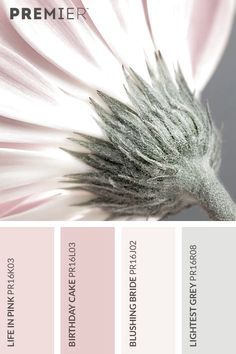 Soft and delicate flora colour palette. Life in Pink: Birthday Cake: Blushing Bride: Lightest Grey: Today let's do pastel pinks with palest greyA gorgeous feminine mood board with the flower as a beautiful representation of the palette. Interior Paint Colors, Paint Colors For Home, House Colors, Paint Colours, Pastel Colours, Soft Colors, Colour Pallette, Colour Schemes, Color Combos