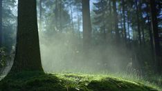 cinemagraph gif nature cinemagraph smoke tree forest perfect loop cinemagraphs sunrise hill dawn fog moss videography mist living stills Aesthetic Gif, Aesthetic Photo, Living Still Life, Gifs, Darkside, Forest Path, Tree Forest, Mystical Forest, Nature Gif