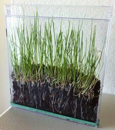 Grass seeds+soil+CD case= Cool!