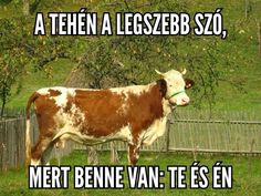 Tehén Puns, Wonders Of The World, Funny Jokes, Haha, Kermit, Have Fun, Funny Pictures, Animals, Humor