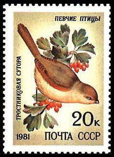 Znaczek: Reed parrotbill (Paradoxornis heudei) (ZSRR) (Song Birds) Mi:SU 5106