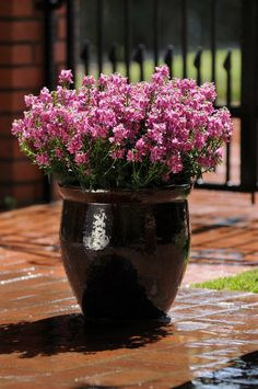 20 Wonderful Flower Pot Design And Decor Ideas For This Spring - Add color to your garden, patio, or indoor space with simple flower pot crafts. Flower pots are functional blank canvases, encouraging a wide range of. Container Flowers, Container Plants, Container Gardening, Succulent Containers, Cool Plants, Potted Plants, Porch Plants, Indoor Plants, Backyard Garden Landscape