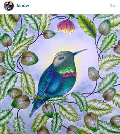 #inspirationalcoloringpages #coloringbooks #livrosdecolorir #jardimsecreto #secretgarden #florestaencantada #enchantedforest #páginasparacolorir  #johannabasford #reinoanimal #animalkingdom