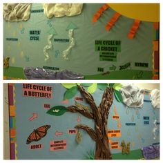 Bulletin board water cycle, butterfly life cycle, science