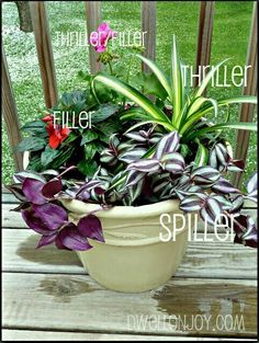 "Three rules to remember when planting a container pot. It's as simple as three plants. One that grows vertically for the ""wow"" factor. One that spills dramatically over the side of your pot. And one or two filler plants {depending on the size of your container} to liven up the empty space. The perfect container garden equation. Be sure to use both foliage and flowers. Try contrasting colors and textures to get the most dramatic look!"