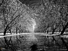 Incredible black and white photo