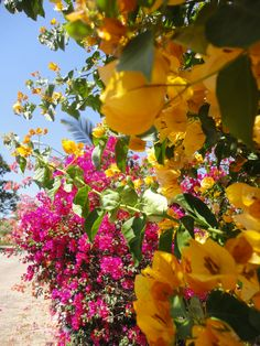 Beautiful Mexican flora, in Rincon de Guayabitos