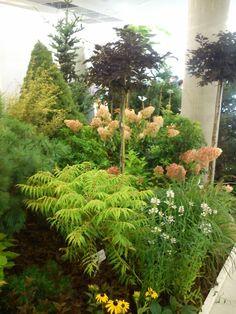 FLORA Czech Republic, Flora, Plants, Plant, Planting