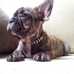 Some day I hope to have one of these cuties!! Who couldn't love this face! #buldog