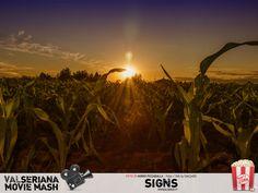 Questa bella fotografia di Mirko Pizzaballa ritrae le piante di granoturco nei campi di Levate (Bergamo). Non sappiamo se sia il particolare gioco di luce o la prospettiva, ma sembra davvero di trovarci in Pennsylvania, dove i cerchi nel grano perseguitano Graham Hess nel celebre Signs di Night Shyamalan. #Signs Pennsylvania, Bella, Graham, Celestial, Sunset, Movies, Outdoor, Fotografia, Outdoors