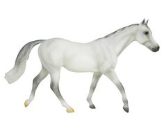 Want list for CM - Warmblood mare