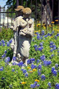 Texas Bluebonnets by bj