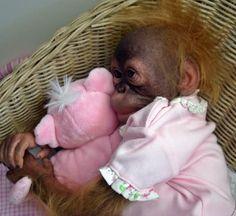 Monkey baby <3