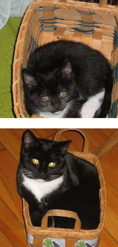 """Then And Now, In A Basket 