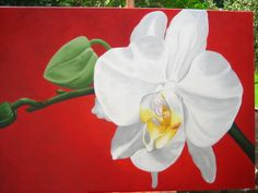 Orchid white  Acrylic painting