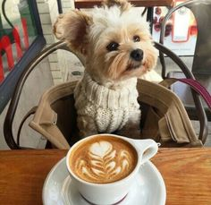 A dog and a latte: two of my favorite things!