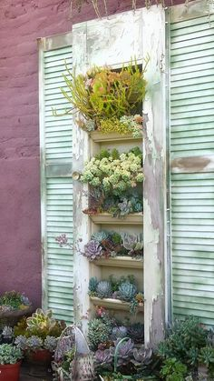 Shutter door succulent planter .Will definitely be doing this in the future. via Design for Serenity....at Succulent Cafe