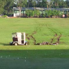 Houston we have a problem.... #golf #tourlife #caddie #adt_golf