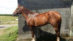 Beautiful horsey