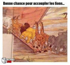 Bonne chance pour les lions... - Be-troll - vidéos humour, actualité insolite
