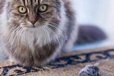 Why Does My Cat Bring Home Dead Animals? | Mental Floss