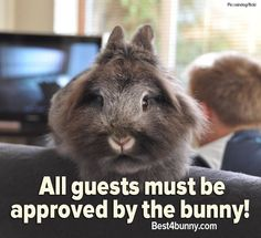 Always make sure the bunny approves!