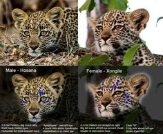 Karula 's babies 7-16